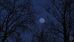 Blue moon of ... (Real_Aragorn) Tags: mond moon luna lune