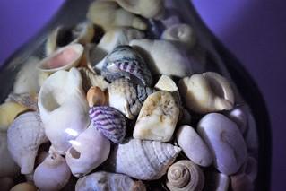 seaside in a bottle