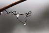 Drops (Vitatrix) Tags: tropfen drops dreieck rebe winter natur