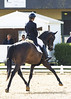HOT CHOCOLATE - H BWP - 2007 (HARAS DE LA GESSE) Tags: cheval horse bwp dressage poulain pouliche lusitano lusitanien warmblood