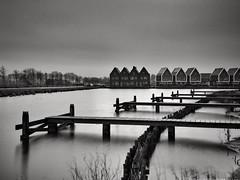 Meerstad Groningen (iPhone Fotograaf) Tags: blackandwhite water groningen dutch iphone6s