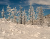 Winter White (mikeSF_) Tags: california yosemite park snow winter pentax mikeoria trees tuolumne ynp nationalpark yosemitenationalpark 120 120mm outdoor mikeoriaphotography wwwmikeoriacom