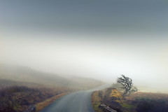 Road in the Fog (John Mee Photography) Tags: red green ireland irelandlandscape irelandtourism oldireland mayo mayolandscapes mayolandscape mayotourism castlebar bofennaun weather fog foggy road roadporn roadthroughlife twistyroad windingroad heather bog tree trees lonetree mountain hill hills january autumn winter lonely desolate alone