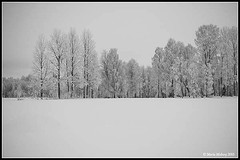 Winter Trees (mmoborg) Tags: mmoborg winter snow trees frost