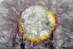 frozen sunset... (firstlookimages) Tags: art artistic artisticmanipulation abstractnature abstract digitalmanipulation digitalart digitalphotography detail weather winter sunset frozen