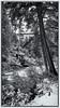 Early Autumn Snow (B&W) (Mark Kaletka) Tags: custergallitinnf roadtrip beartoothhighway nationalforest montana mt lightroom campsite