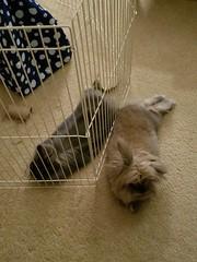 Max and Roy (Pinky Earl) Tags: rabbit bunny bun lapin conejo usagi