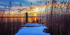 Morning Mood (Jens Haggren) Tags: sun sunrise morning sky clouds sea seascape water jetty bridge snow reed grass landscape view nature olympus em1 nacka sweden jenshaggren