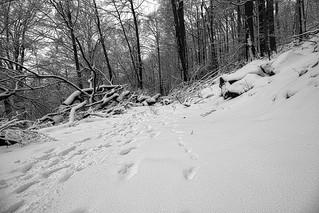 Spuren im Schnee; Milseburg/Rhön