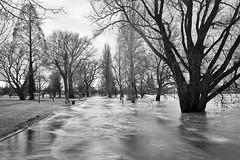 Hochwasser (hbothmann) Tags: köln nrw deutschland cologne colonia colônia hochwasser rhein rheinpark variosonnar163528za