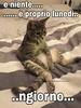 #buongiorno #lunedì #cat #buona #giornata #atutti #Tiziana #Mosso https://www.facebook.com/MossoTiziana/ #link #divertenti (tizianamosso) Tags: divertenti mosso tiziana link buona buongiorno atutti giornata lunedì cat