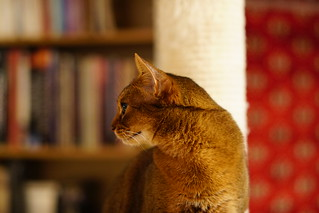 Lizzie in profile