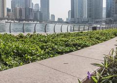 Purple Flower (jelleteusink) Tags: dubai marina flower purple plants sky water skyscrapers buildings architecture