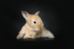 3 weeks (Photography Ilona Mikkonen) Tags: green cute rabbit canon pet petphoto