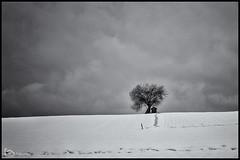 lonely tree (alamond) Tags: tree lonelytree fool hill snow sky dramatic winter bw blackandwhite monochrome clouds canon 7d markii mkii llens ef 1740 f4 l usm alamond brane zalar