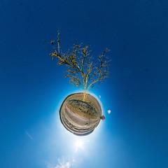 Tree (HamburgerJung) Tags: niedersachsen germany deutschland baum tree winter sonne bluesky blauer himmel planet littleplanet stereographic