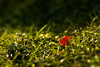 Different (MooziX) Tags: fall macro summer autumn background backlit beautiful blurred bokeh drops fallen grass green ground leaf nature plant red sunrise sunset wallpaper wet