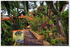 Orchideen Garten Teneriffa (Don111 Spangemacher) Tags: pflanzen puertodelacruz palmen kulturlandschaft städte sträucher bunt baum wege natur naturpark november teneriffa romantik urlaub reisen spanien