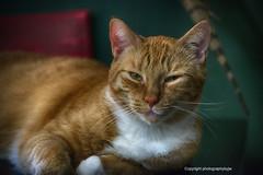Cat Nap (Photographybyjw) Tags: catnapprissyfoundanewspottonapon stillclosetoherfavoritewindow ibotheredherwhileiwasshootingafewshots shewentbacktosleep foundinnorthcarolinaphotographybyjwcatnapprissyfelinemammalnewspottonaponclosefavoritewindowbotheredherruralcountryusa