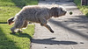 Fetch (remiklitsch) Tags: fetch dog tennisball sidwalk morning santamonica nikon remiklitsch green motion action fun njotment activity sundaymorning shadow