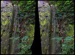 Cart Ruts in Germany 3-D / CrossView / Stereoscopy / HDR / Raw (Stereotron) Tags: sachsenanhalt saxonyanhalt ostfalen harz mountains gebirge ostfalia hardt hart hercynia harzgau teufelsmauer cartruts geology crosseye crosseyed crossview xview cross eye pair freeview sidebyside sbs kreuzblick 3d 3dphoto 3dstereo 3rddimension spatial stereo stereo3d stereophoto stereophotography stereoscopic stereoscopy stereotron threedimensional stereoview stereophotomaker stereophotograph 3dpicture 3dglasses 3dimage canon eos 550d chacha singlelens kitlens 1855mm tonemapping hdr hdri raw 3dframe fancyframe floatingwindow spatialframe stereowindow window