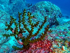 Coral (markb120) Tags: animal fauna fish coral water sea underwater diving scuba