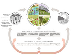 Impacts sur la biodiversité / Impacts on biodiversity (Zoï Environment Network) Tags: switzerland environment ecology graphic diagram chart scheme risk opportunity globalwarming climatechange climate consequence impact influence climat changement rechauffement effet risque opportunité social economic evolution climatic biodiversity ecosystem nature species diversity co2 protection quality air water soil alpine dry forest urbanisation agriculture land population growth biodiversité écosystème espèce diversité économique alpin sec humide eau sol forêt tourisme suisse