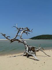 Kosi Bay, KwaZulu-Natal