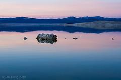 Mono Lake Calm (CatDancing) Tags: monolake blue bluehour calm color dusk evening lake reflection reflections sunset tufa twilight water winter 123 123nature