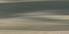 SK5_1990 (glidergoth) Tags: therfield hertfordshire arable fields downs fallowdeer damadama landscape