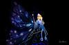 Tokyo Disneyland 2017 40 - Dreamlights Electrical Parade 03 (JUNEAU BISCUITS) Tags: dreamlights dreamlightsparade disney disneyresort disneyparks waltdisney tokyodisneyland tokyodisney japan parade nikond810 nikon bluefairy pinocchio cinderellascastle themepark hawaiiphotographer
