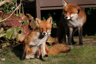 garden visitors
