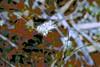 Flora Abstract! (maginoz1) Tags: abstract art flora contemporary manipulation flower plum summer january 2018 bulla melbourne victoria australia canon g3x