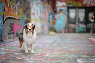 Lux in Graffiti Alley