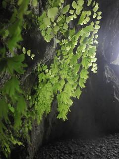 Guizhou China cave  纳雍出水洞