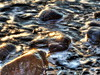 Fool's Gold (George Stenberg Photography) Tags: rocks water waves reflections beach seashore