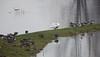 Hoogwater 2018 9 (megegj)) Tags: gert flood hoogwater