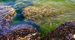 Below The Surface (Khaled M. K. HEGAZY) Tags: nikon coolpix p520 alexandria egypt helnanpalestinehotel montazahbay nature outdoor closeup sea mediterranean water rock red green yellow brown white black