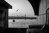 ..and I'm feeling good (Özgür Gürgey) Tags: 2017 35mm bw d750 eminönü galatabridge goldenhorn haliç nikon samyang birds bridge istanbul grainy vignette