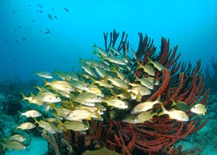 Reef Life (gillybooze) Tags: madaleunderwaterimages ©allrightsreserved fish coral sea snellswindow reef caribbean bonaire shoal underwater scuba sand