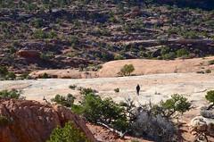 Sue On The Upheaval Dome Trail (Joe Shlabotnik) Tags: justsue nationalpark utah sue hiking 2017 canyonlands november2017 canyonlandsnationalpark afsdxvrzoomnikkor18105mmf3556ged