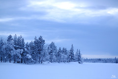 Snow landscape of Lapland, Finland / Paysage enneigé de Laponie, Finlande (Pito Charles) Tags: lapland laponie europa europe finland finlande landscape paysage neige snow froid cold nature wild canon canoneos70d canon70d 70d trip journey voyage outdoor yllas yllasjarvi 50mm 50mmf18
