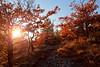 Lumière de Noël dans la Drôme (BL : : photos) Tags: drôme saou sunset soleil chêne chemin calcaire orange hiver noël canoneos5dmarkii canonef1740mmf4lusm drômeprovençale