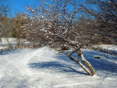 January - After the snow storm 2 (Stan S. Gallery) Tags: winter winterscape snow snowscape january fence railingfence shadowplay shadows trees winterbeauty