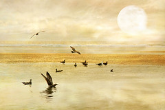 in the realms of gold (1crzqbn) Tags: 1crzqbn natur golden gold sliderssunday birds moon nature naturaleza au meltingpoint1064°c 79 sea ocean