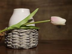 Cantilever construction (N.the.Kudzu) Tags: home tabletop stilllife basket vase flower canon70d