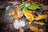 Acorn And Fallen Leaves (vtsankov) Tags: yellow autumn oak brown fall background acorn vegetation root environment rural stick fallenleaves growth plant branch ecosystem sprout compost horizontal growing leaf seed field orange ground golden autumnal ecology nature forest season outdoor land beautiful countryside soil organic grow view grass fresh autumnleaves object naturelandscape naturaltexturebackground closeup leaves acorns autumnbackground