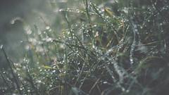 PB_012618_04 (losing.today) Tags: brianyoung oregon pacificnorthwest portland pdx portlandoregon portlandor winter nature outdoors naturepark plantlife plants moodyseason darkseason losingtoday grass grassstudies