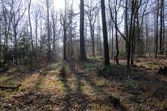DSC08669 (Bike and hiker) Tags: jalhay hertogenwald gileppe