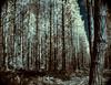Forest IR (Dan Denison) Tags: ir forest infared r72 hoya 28mm takumar vintage pentax bw